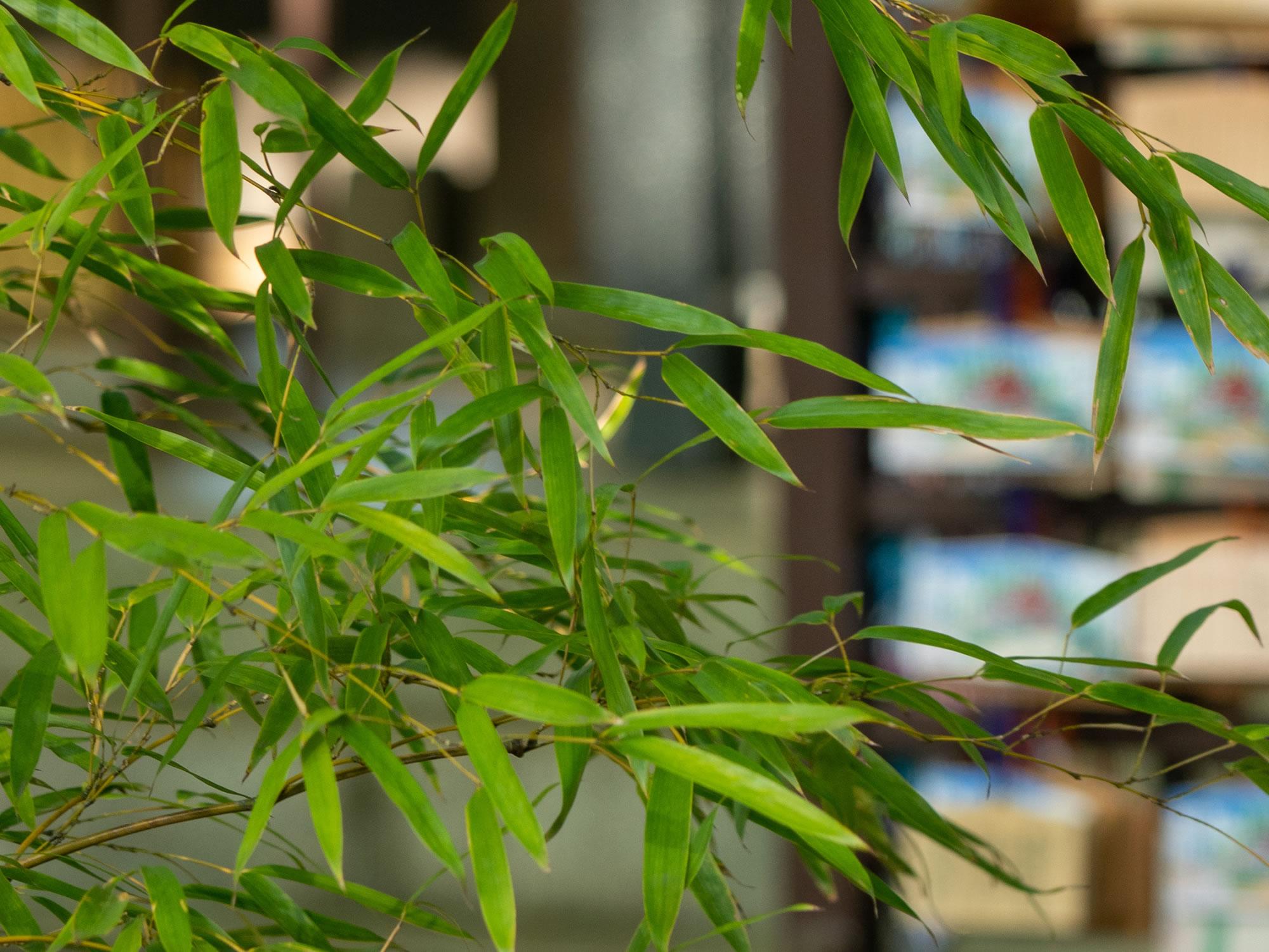 一言主と三岐の竹の物語